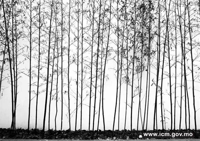 20190409170005_2_ trees #02-01