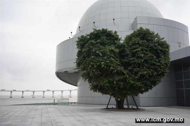 20200110110858_2月22日音乐会心形树